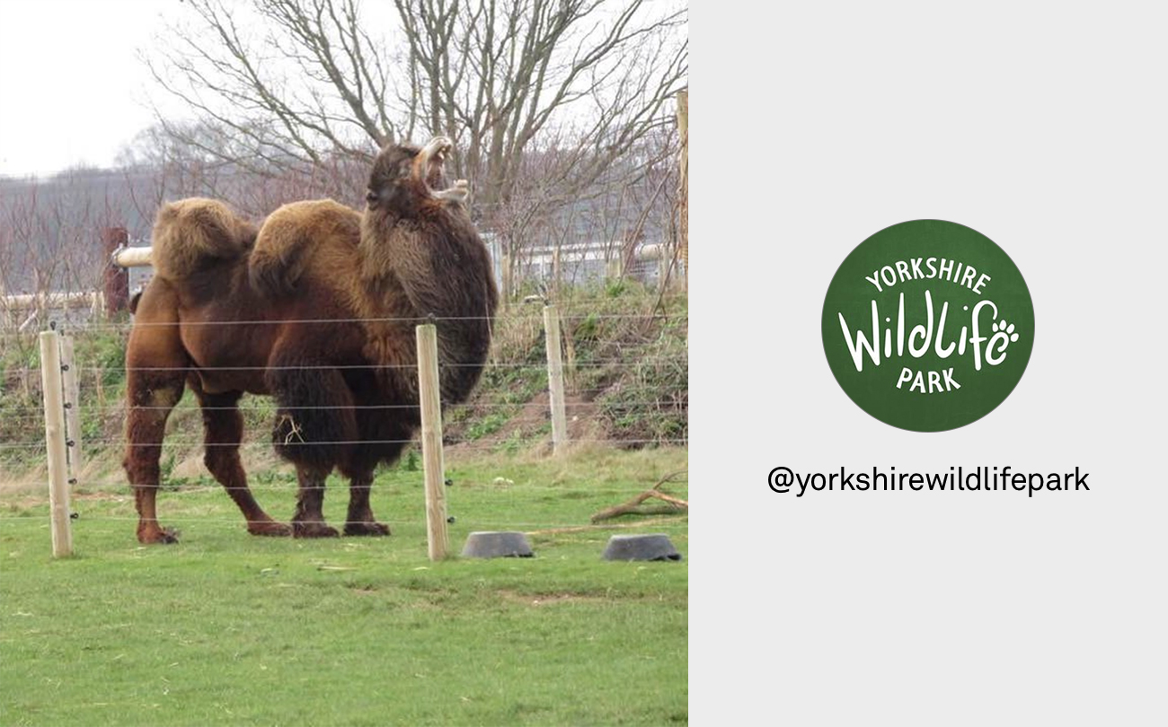 Yorkshire wildlife